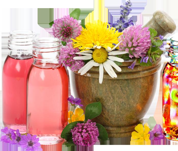 Травы и препараты для потенции image 2