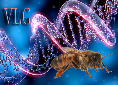 Болезни пчел меры борьбы и профилактика