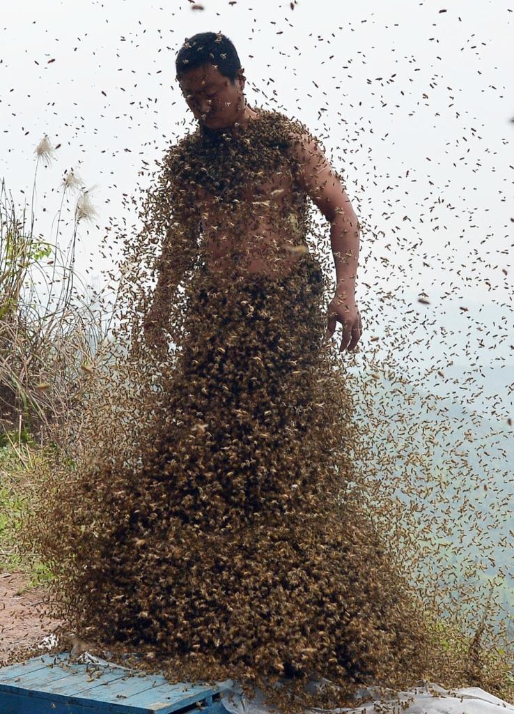 Что сделать чтобы пчелы не роились Своими руками - Как сделать самому 77